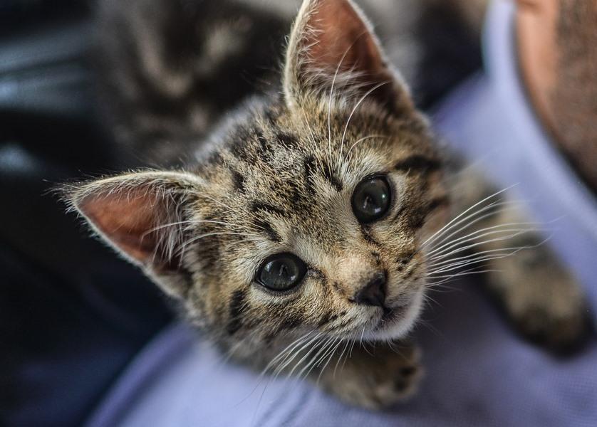 kitten-2353403_960_720