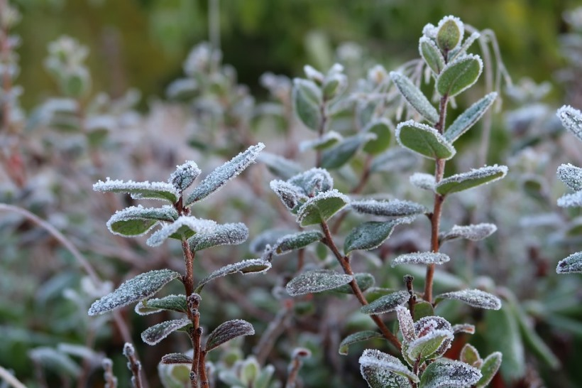 the-first-frost-2751407_960_720